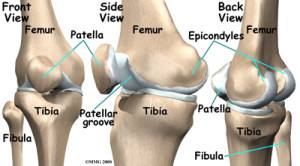 knee_arthroplasty_anatomy01